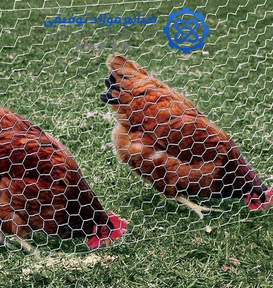 راهنمای خرید توری مرغی